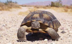 Desert Tortoise rural preservation area Las Vegas hotel zip codes map